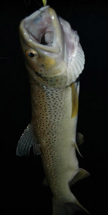 Price River Brown