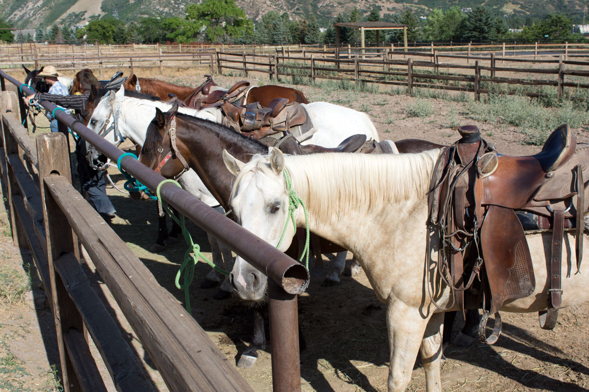 Western Trail Rides horse