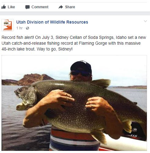 flaming gorge lake trout record