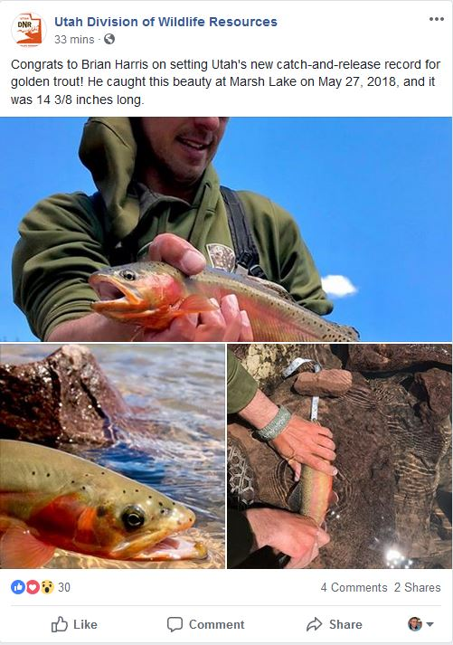 utah record golden trout