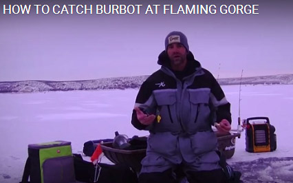 flaming gorge burbot